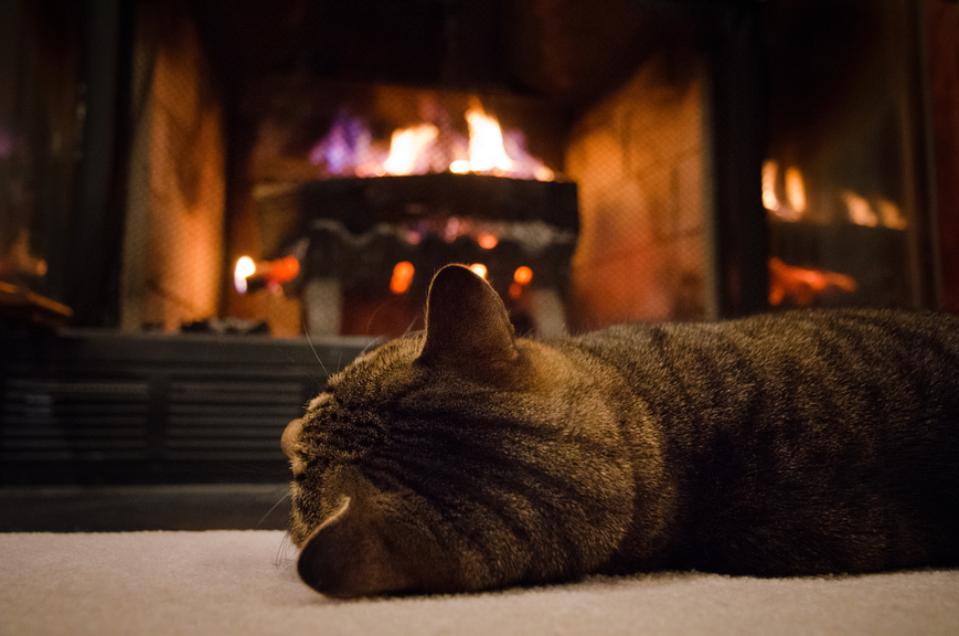 Cat in front of gas fireplace