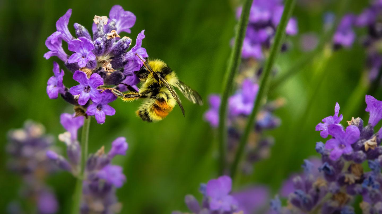 Pollinator Guide Header (1 of 1)