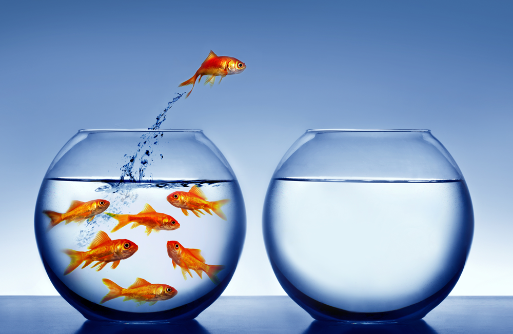 Sometimes positive deviance means being a fish out of water