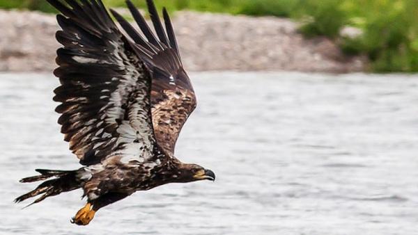 Eagle Eye-2